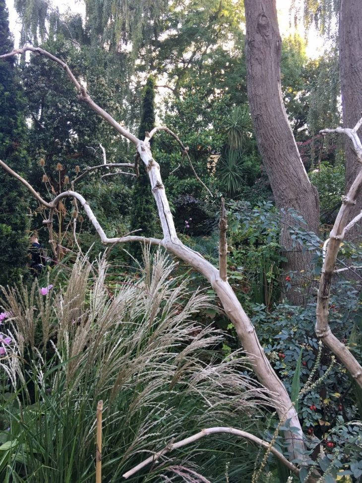 The beautiful and gentle front border filled with Miscanthus, Calamagrostis and Teasel framed by bone-like branches of a dead shrub.