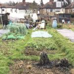 Allotment: weed suppressant membrane – beating weeds organically