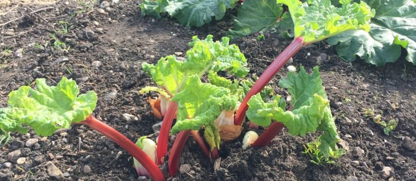 Allotment Month 16: surprise, surprise