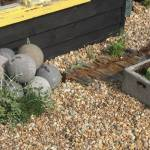 At the end of the earth, plants – Prospect Cottage, Dungeness