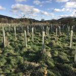 Reforesting Yorkshire