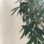 Houseplant trends: the bigger the better