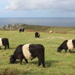 Cornwall: rock and stone