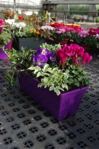 """Les jardinières """"prêtes à poser""""  sont une tendance forte souhaitée par les consommateurs (photo S. Walek"""
