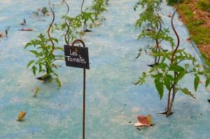 Il faut protéger à titre préventif les plants de tomates contre le mildiou
