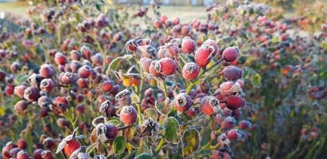 FRIENDLY fruits et givre 2020-11-25 at 08.31.50 (1)