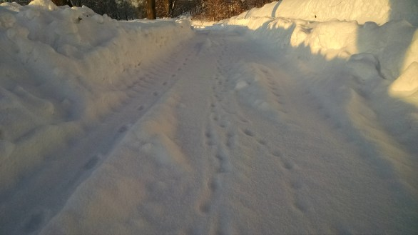 Coyote tracks at Fairview Cemetery