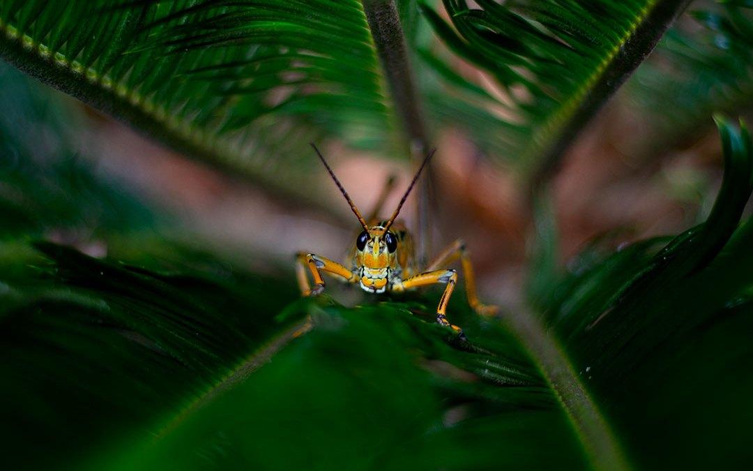 Like Grasshoppers