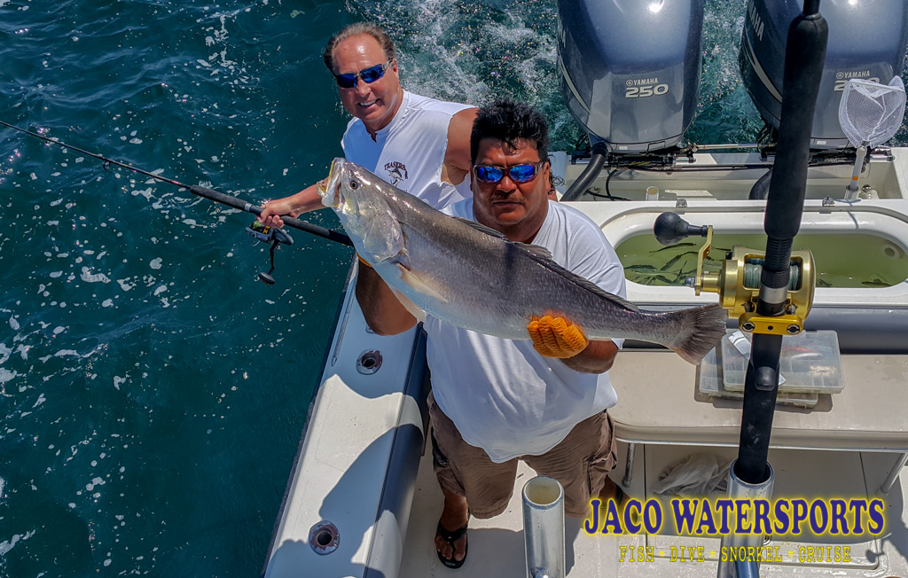 Client with a Corvina