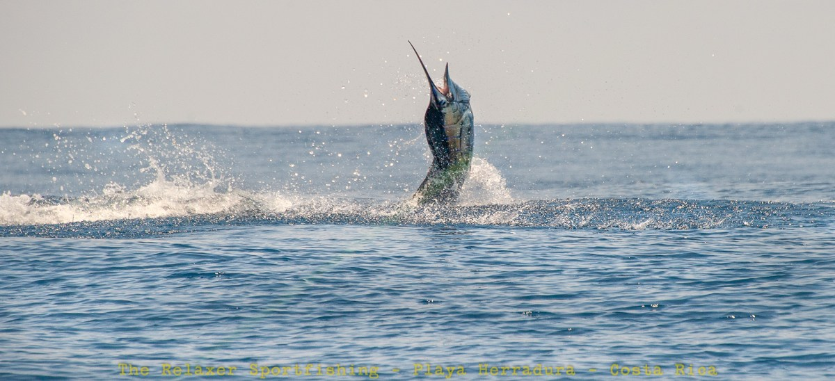 A SailFish Breaching Surface