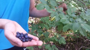 Are you really trying to tell me, Nick, that these delicious wild blueberries won't actually sustain me for our five-hour escapade up the mountain?
