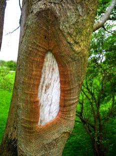 hole in tree trunk1