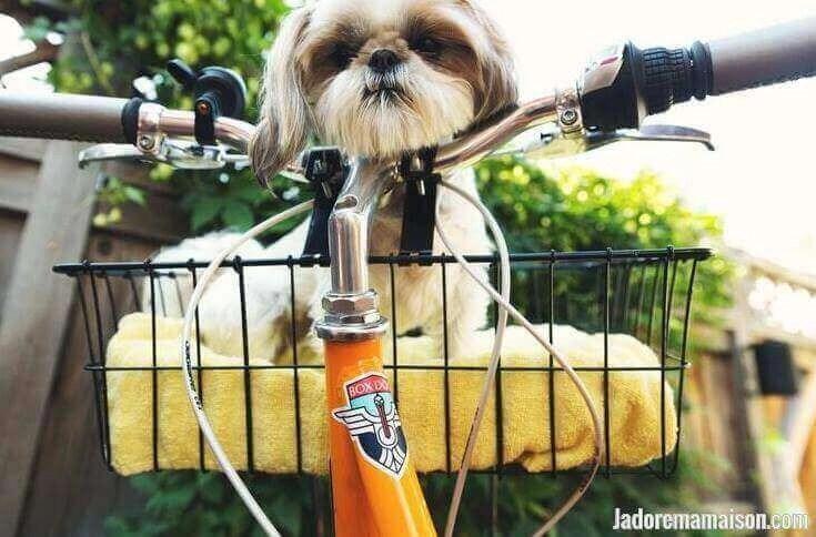 remorque vélo pour chien 40 Kg