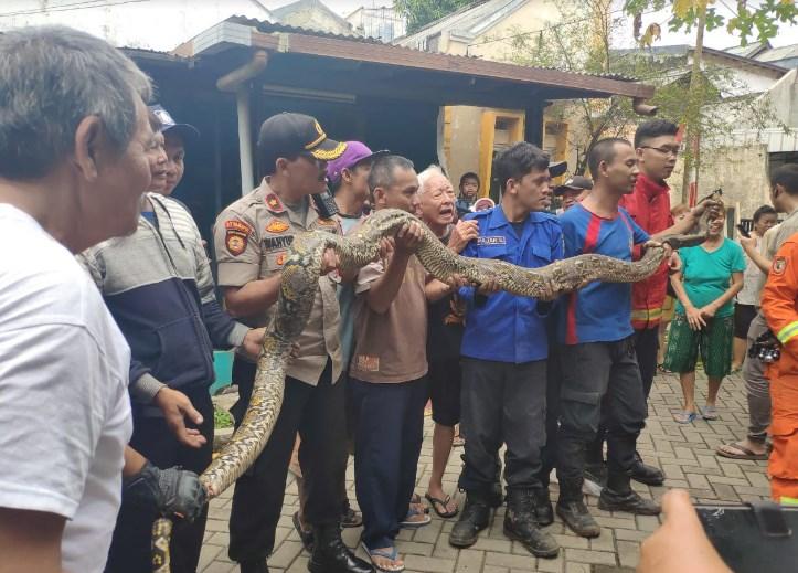 Bpbd Kota Tangerang Tangkap Ular Sanca
