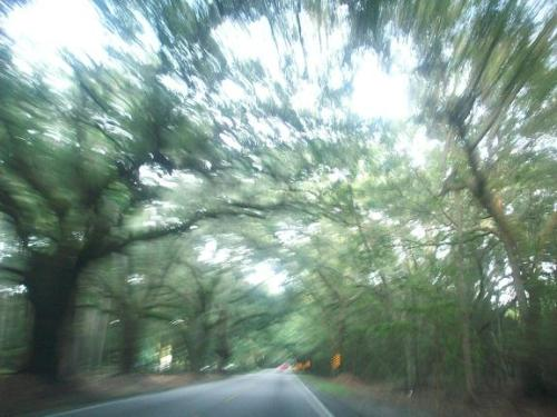 Traveling the road between Summerville and Charleston SC