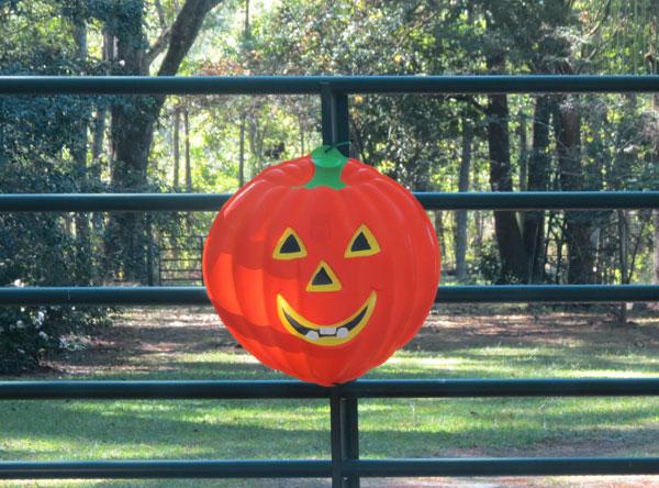 Happy Pumpkin in SC
