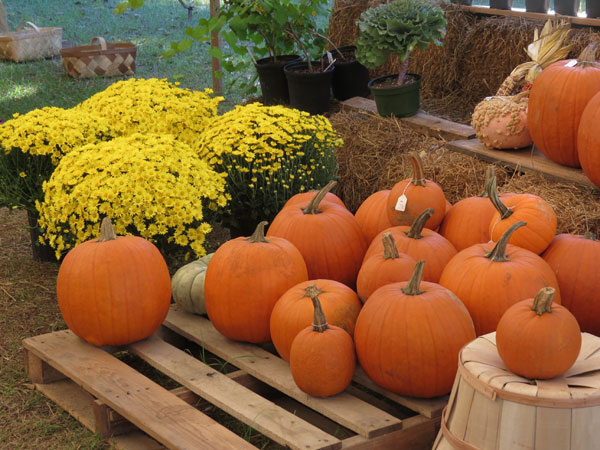 Pumpkin Display in SC
