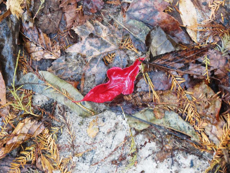 Fall Leaves in SC