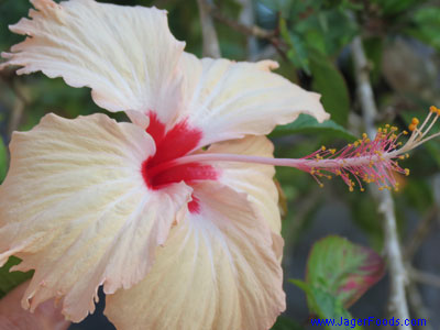 Beautiful Flowers are abundant in Belize