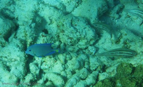 Reef Fish Belize