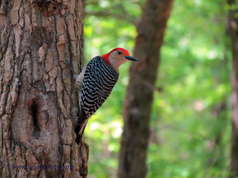 Woodpecker Lake Wateree SP