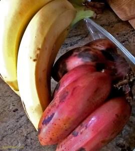 Red Cuban Bananas