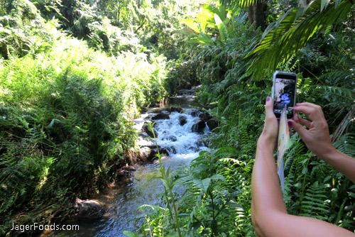 Botanical Garden River in Hawaii