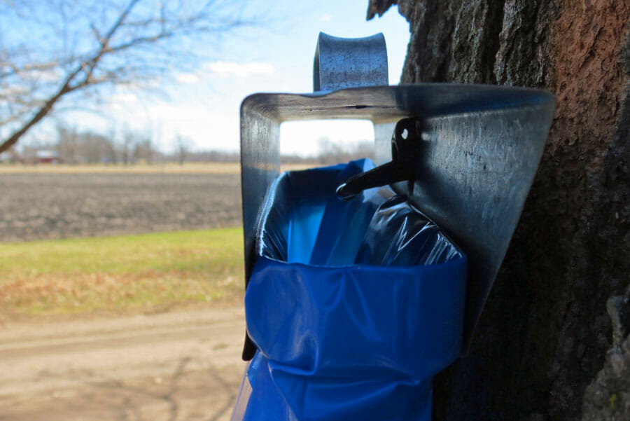 Maple Syrup Sap Sack and Tap