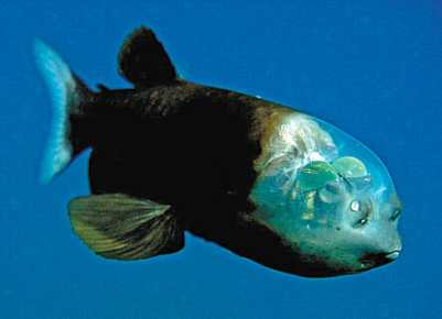 The most unusual fish in the ocean