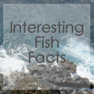 Interesting fish facts for young and old