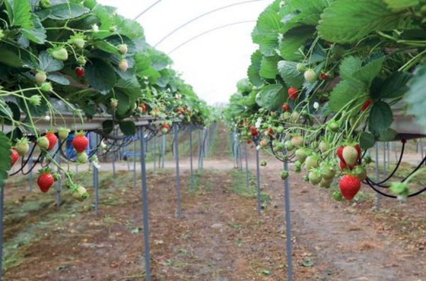 Выращивание в туннелях: порция отраслевых знаний