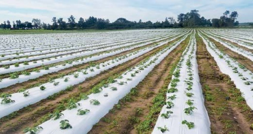 Эффективные решения для выращивания ягод: кокосовый субстрат, мульчирующая ткань, пленка, сетка, горшки