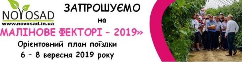 Запрошуємо  на  «Малинове фекторі – 2019»!