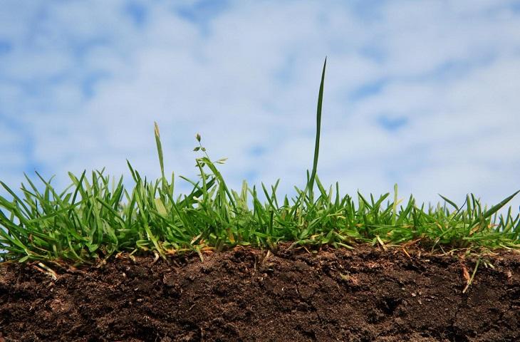Ягідникам на замітку: з 15 липня діятимуть нові правила оформлення землі