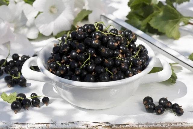 В Україні завершується сезон продажу чорної смородини