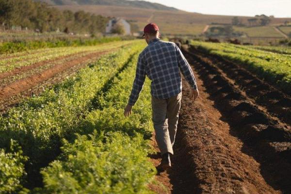 Уряд розширив фермерам доступ до державної підтримки