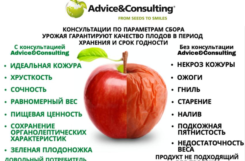 Нова послуга компанії Advice&Consulting допоможе збільшити тривалість зберігання фруктів без втрати якості