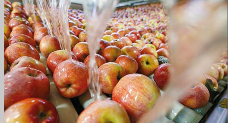 Переробка плодово-ягідної продукції: вітчизняне сьогодення та перспективи
