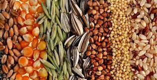 Государство взялось за наведение порядка на рынке семян и посевного материала