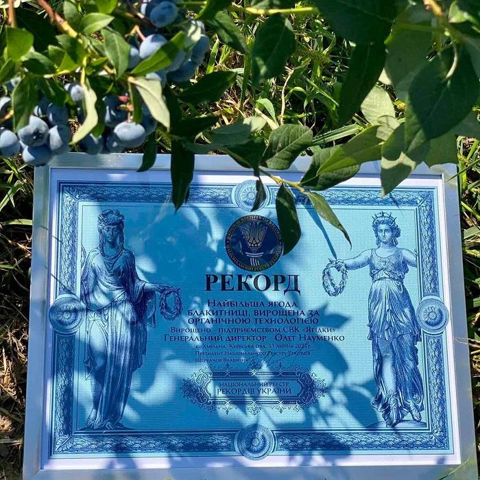 В Україні виростили найбільшу ягоду лохини