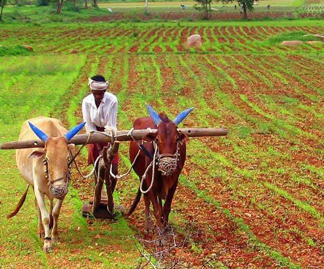 New experiments in Aligarh more risk less in contract farming