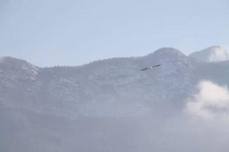 Oiseau volant