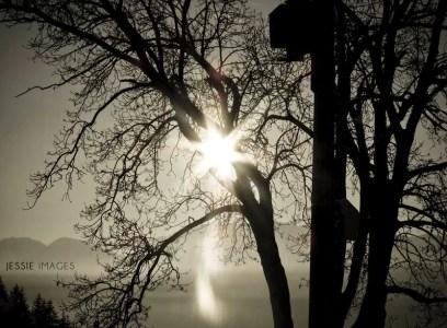 arbre et soleil