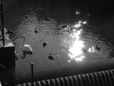 reflets de soleil sur le canal