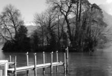 mouettes au bord du lac