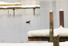 Pontons sous la neige