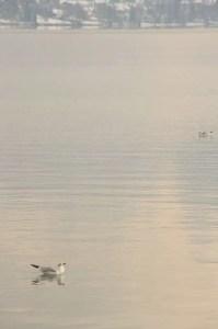 Teintes rosées sur le lac
