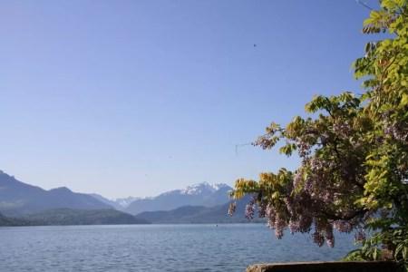 Fleurs roses au lac