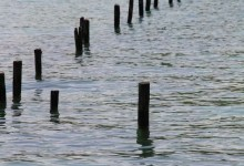 pontons de roselières