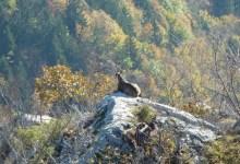 animal sur son rocher
